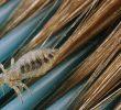 15 Cara Menghilangkan Kutu Rambut dan Telurnya Paling Ampuh